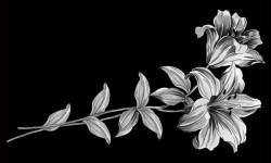 Цветы 005